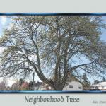 Neighborhood Tree