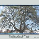 neighborhood_tree